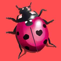 dessin de coccinelle rose fushia avec une tâche en forme de cœur, signature de caroline pillet alias koxintox qui est graphiste illustateur dans le Tarn, à Lisle-sur-Tarn pour le studio de création visuelle
