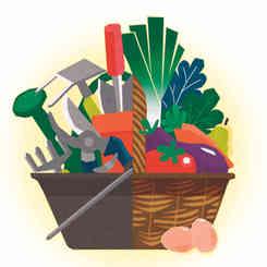 illustration panier avec fruits et legumes mais aussi outils de jardiinage pour decrire les activites de Arnaud, le maraicher realisee par caroline pillet alias koxintox qui est graphiste dans le Tarn à lisle-sur-tarn