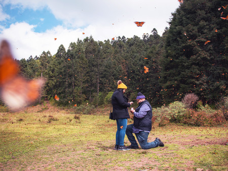 An Engagement Surrounded by Monarch Butterflies