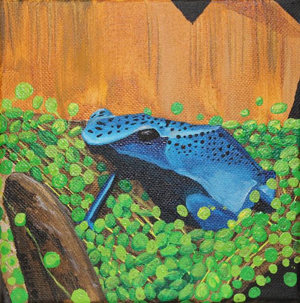 Blue Froggie