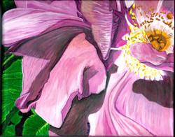 Pink Ingonish Wild Rose