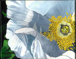 White Ingonish Wild Rose