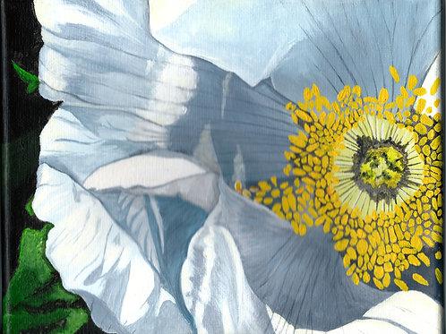 Ingonish White Rose