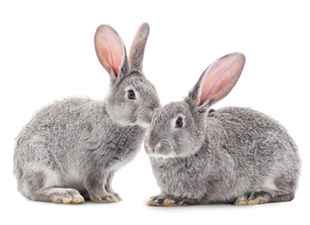 Beauty with a Conscience: California Leads Nation with Ban on Animal-Tested Cosmetics