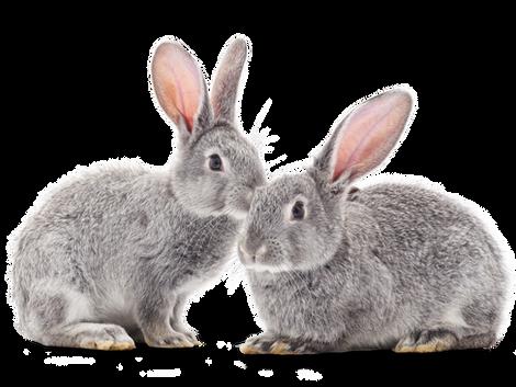 « Non testé sur les animaux » : attention aux mentions trompeuses