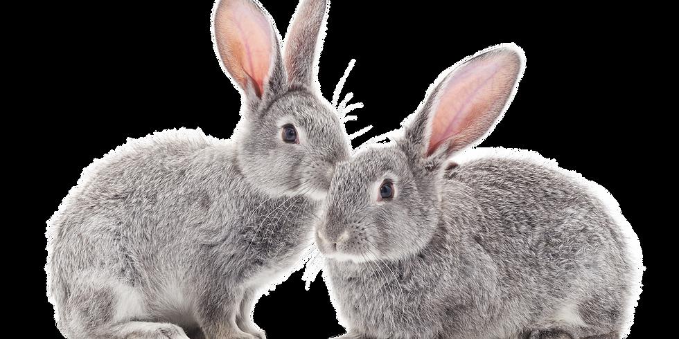 The Rabbit Hole - Free Jam!