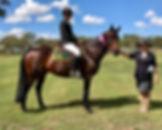 Champion Working Stock Horse.jpg
