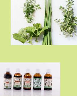 צמחי מרפא 3.jpg