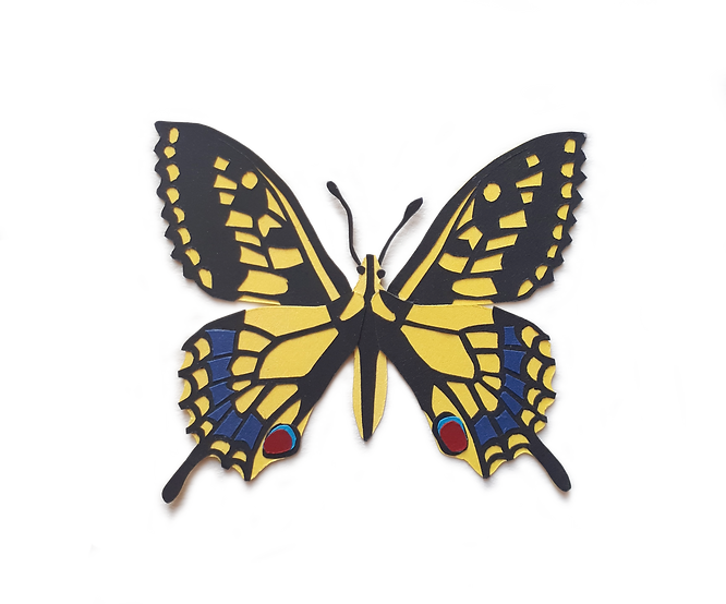 swallowtail_a_transparent_background.png