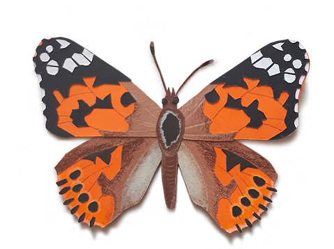 painted_lady_transparent_background_with