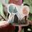 Thumbnail: Tent Die Cut Sticker