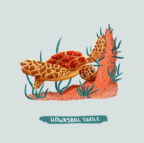 Hawksbille turtle