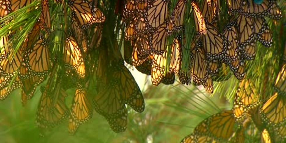 Monarch Caterpillar Nursery Workshop