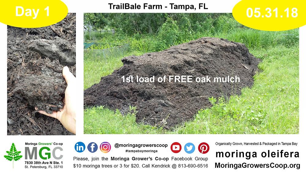 Oak mulch breaks down to make great soil.