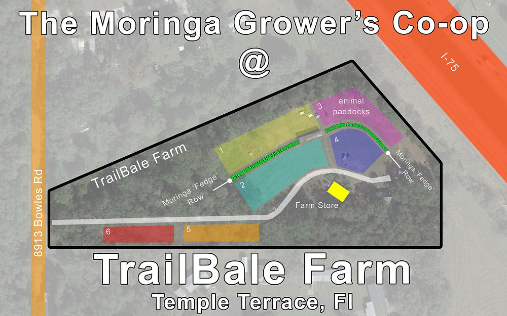 TrailBale Farm naturally pasture raised chicken, goats, turkeys and pigs.