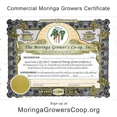 Commercial Moringa Growers Certificate