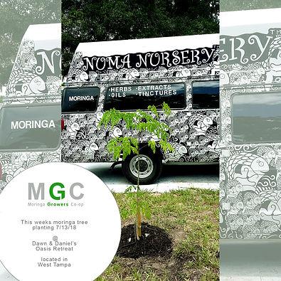 moringa-tree-dawn-n-daniel.jpg