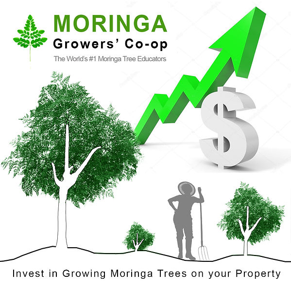 invest-in-growing-moringa.jpg