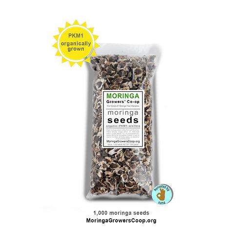 1,000 Moringa Seeds | Organic, PKM1, Oleifera