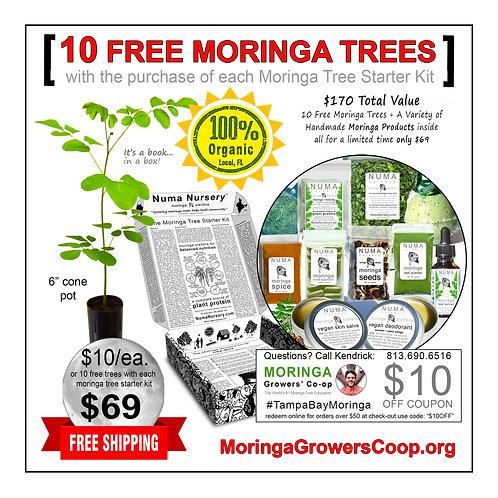 10 Free Moringa Trees with Moringa Tree Starter Box
