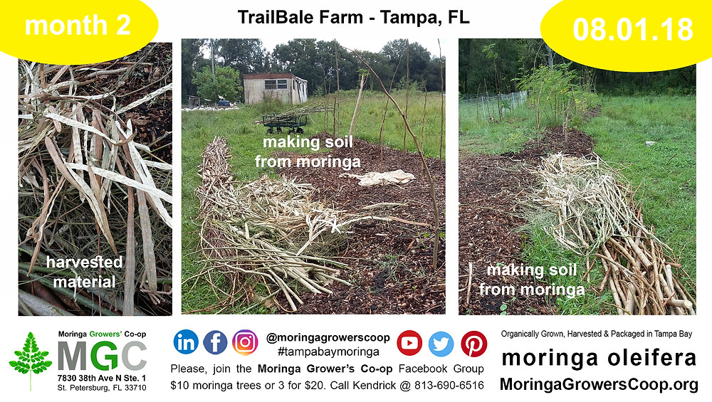 Use moringa trees branches to make composted soil