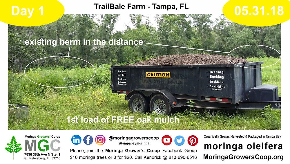 First day at TrailBale Farm planting moringa trees.
