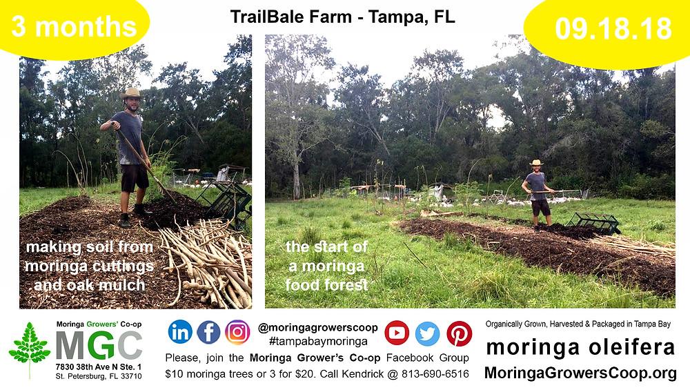 Learn How to Farm Moringa Trees
