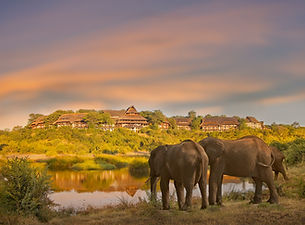 elephants_in_front_of_victoria_falls_saf