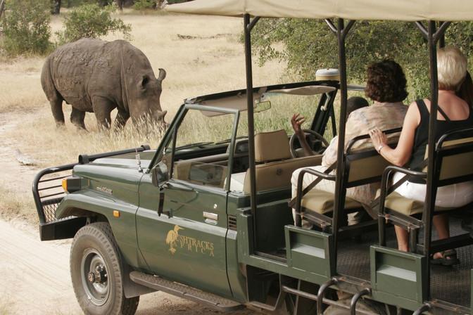 Bushtracks Africa receives fantastic review!