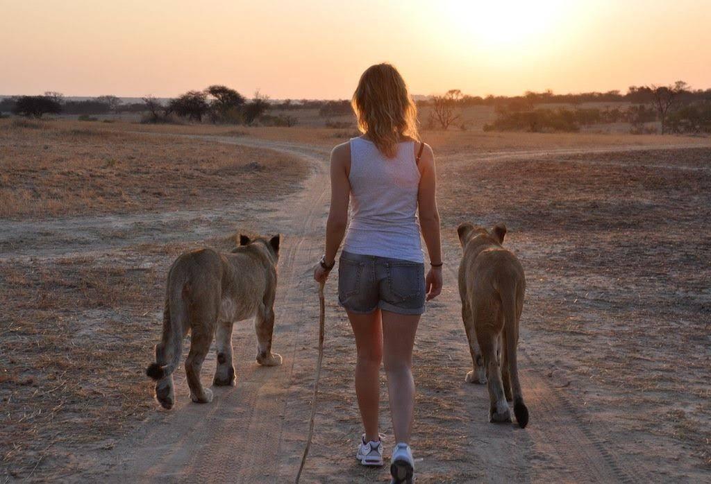 Rhino & Lion Safari