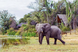 savute-safari-lodge-elephant-lodge1.jpg