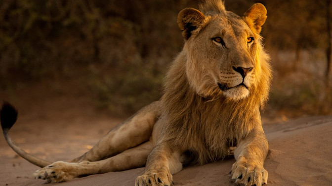 "Bushtracks Africa attends ""Vanishing Kings II - Desert Lion Legacy"" Premier"
