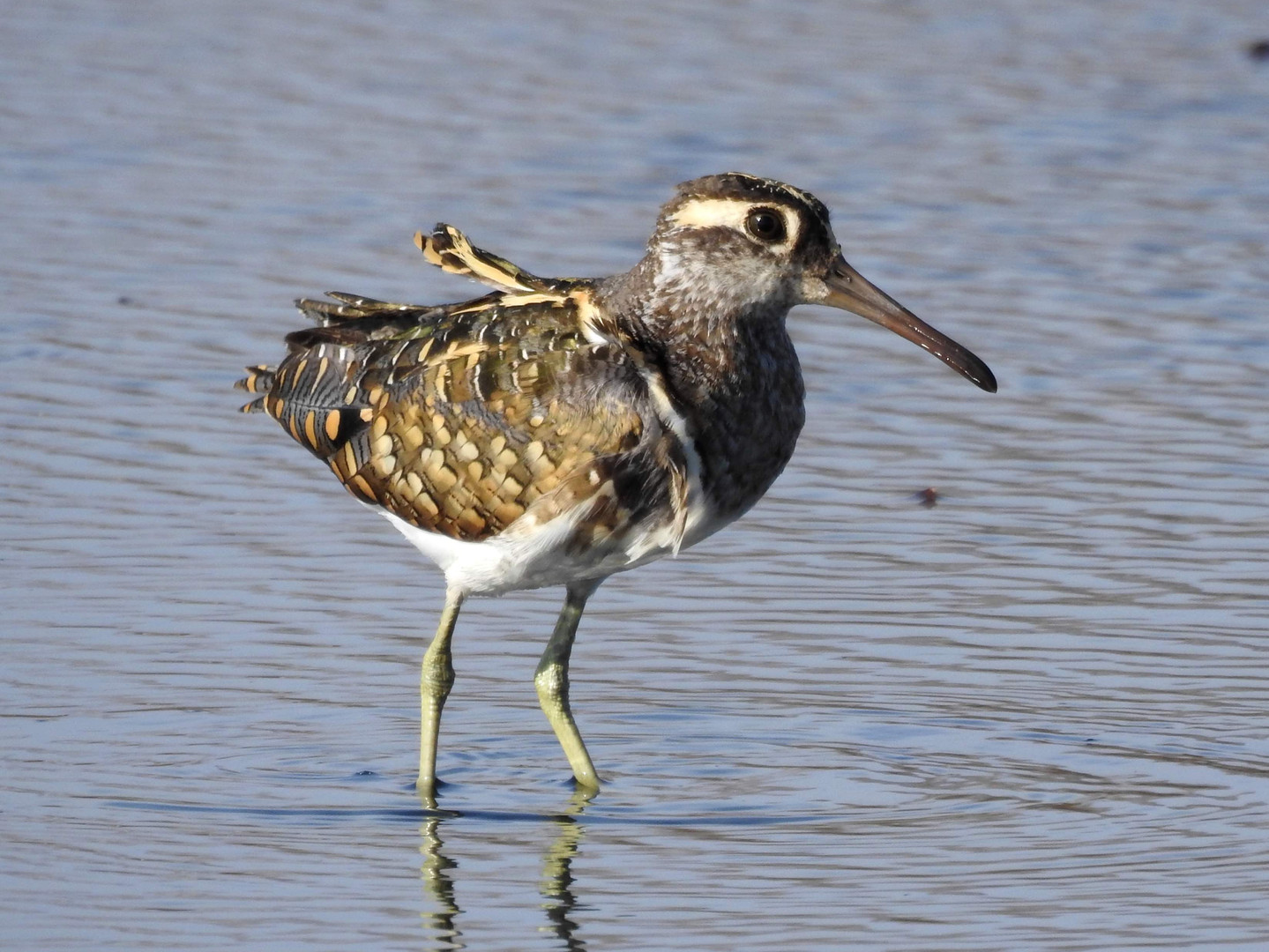 Bird Watching Safari