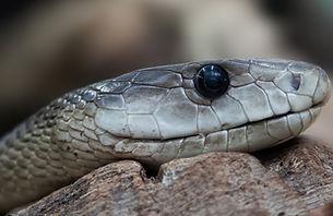 snake-653644_1920.jpg
