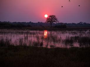 botswana-1022405_1920.jpg