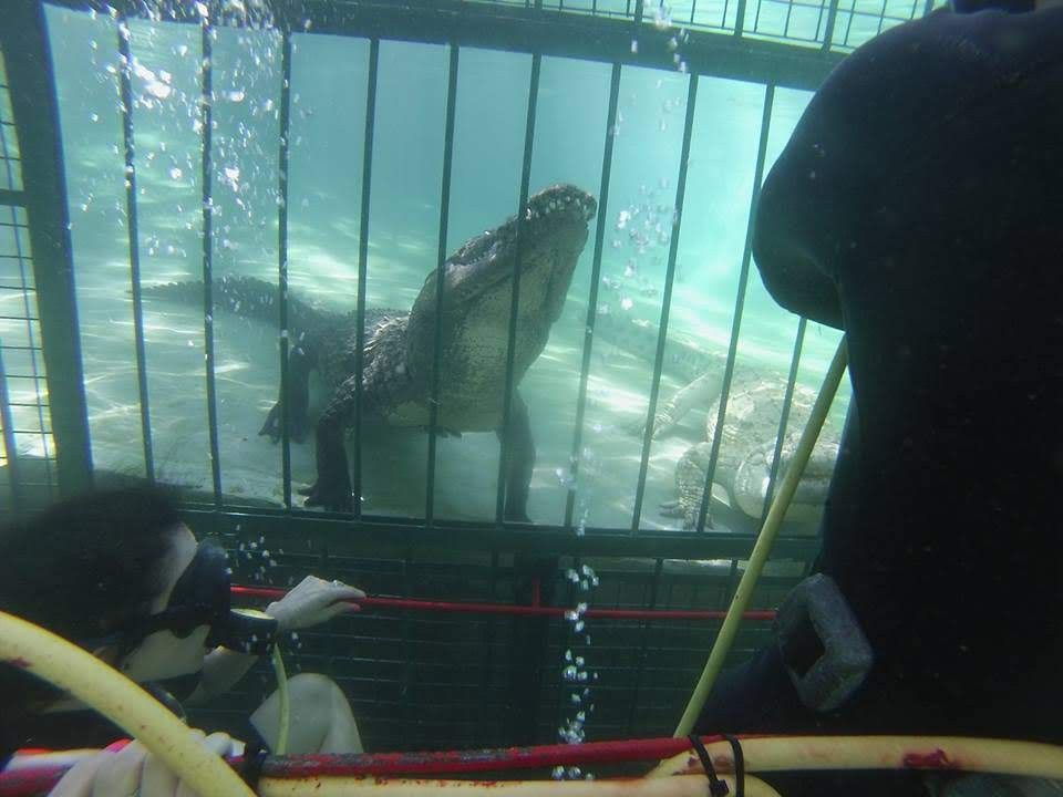 Crocodile Cage Diving