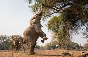 chikwenya_wildlife_2000px_-_kyle_and_rut