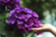 bloom-1853360_1920.jpg