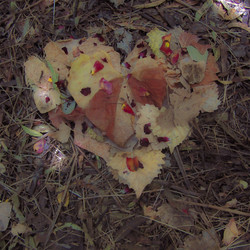 Petaled Heart