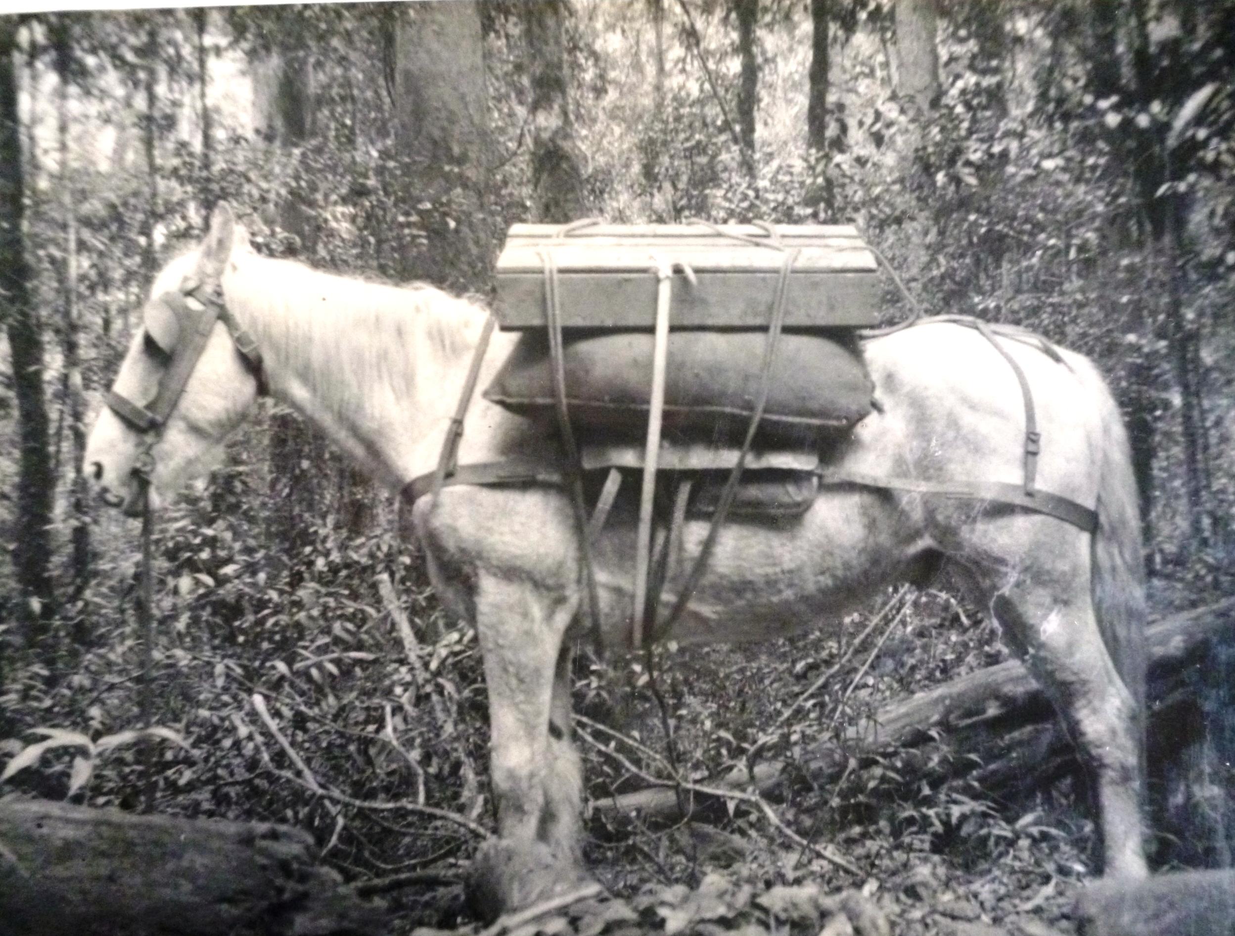 Westray's head stone horse