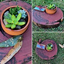 CR plants