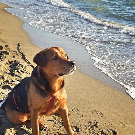 Estate 2019 Cani in spiaggia
