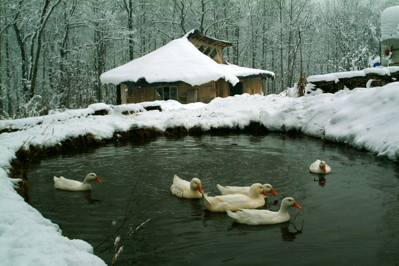Duckpond2004