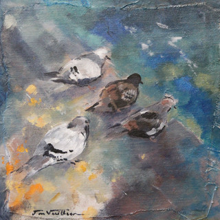 30 X 30        le repos des pigeons