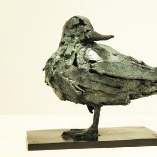 Bronze - Sarcelle