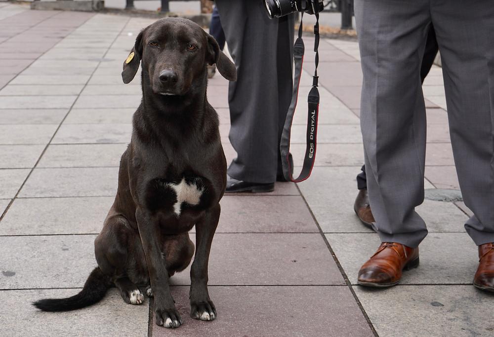 Comme à Istanbul, les chiens errants dûment badges nous accompagnent au hasard des rues. © Fabrice Roy
