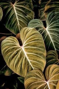 Folhagem I_Flora Brasilis (11).jpg