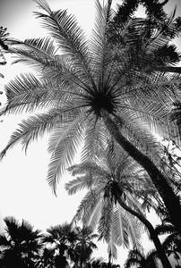 Palmeira PB_Flora Brasilis.jpg
