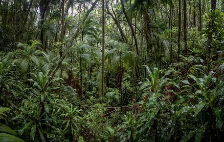 Panorâmica Floresta da Tijuca_Flora Brasilis (17).jpg