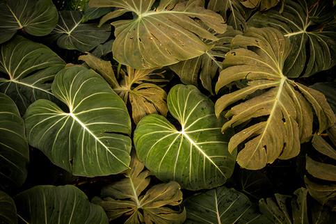 Folhagem II_Flora Brasilis (6).jpg